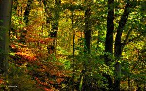 Herbstwald in München Isarhochufer 16:10