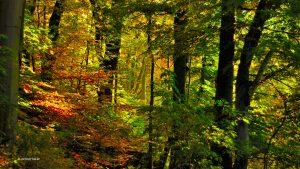 Herbstwald in München Isarhochufer 16:9