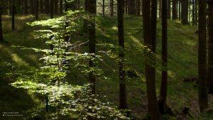 Sunlight breaking through the forest near Pähl 16:9