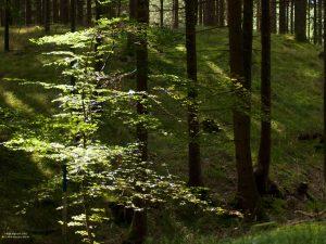 Sunlight breaking through the forest near Pähl 4:3