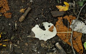 Autumn leaf with a face