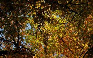 Herbstkrone - Autumn Crown 16:10