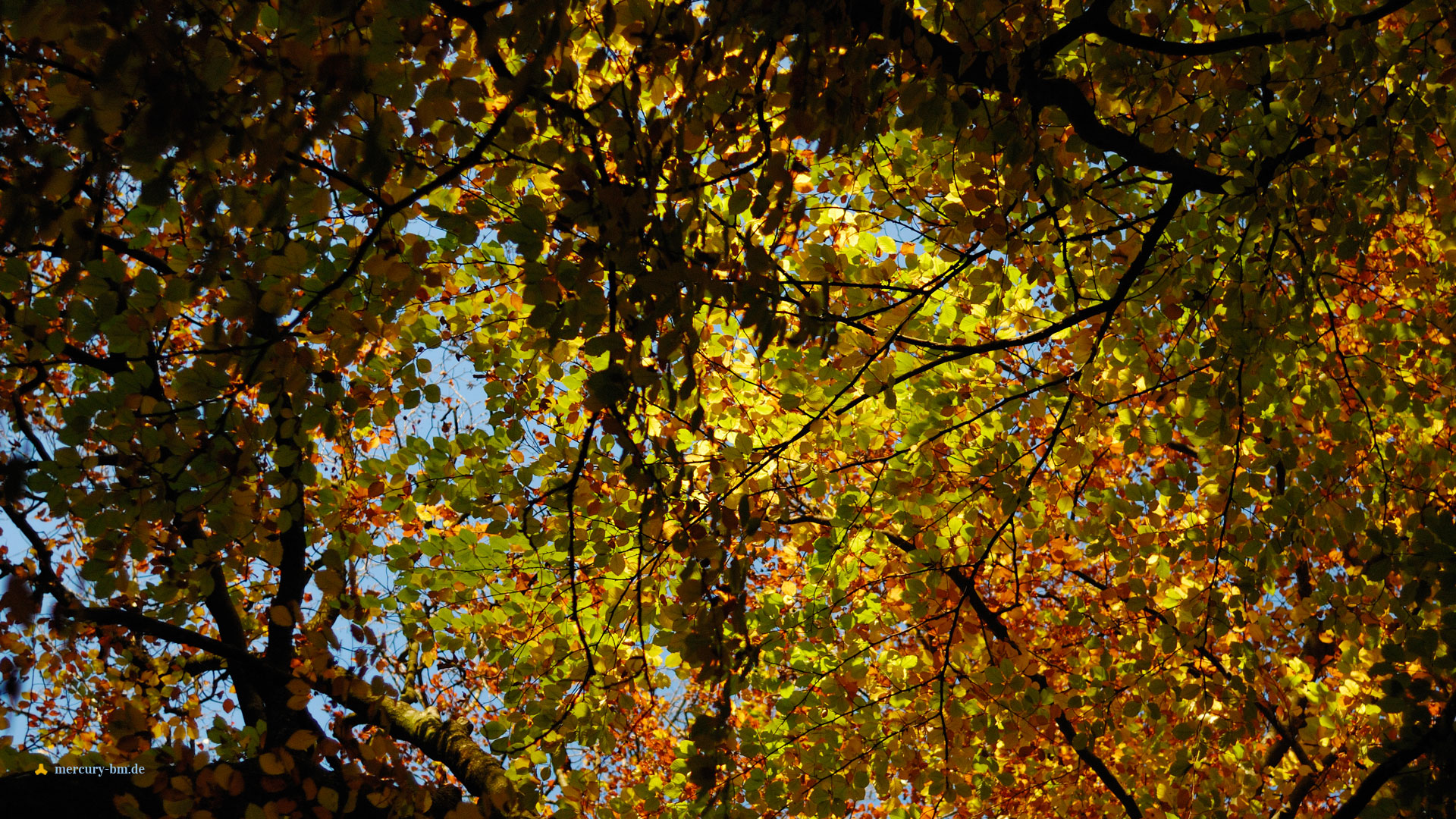 Wallpaper Herbstkrone - Autumn Crown